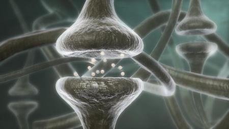 Πώς οι σκέψεις μας αλλάζουν τον εγκέφαλο, τα κύτταρα και τα γονίδιά μας!