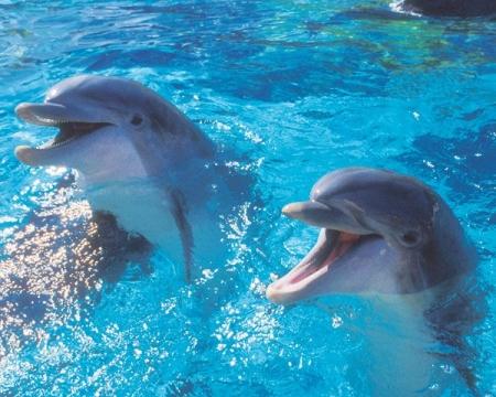 Δελφίνια το χαμόγελο της θάλασσας